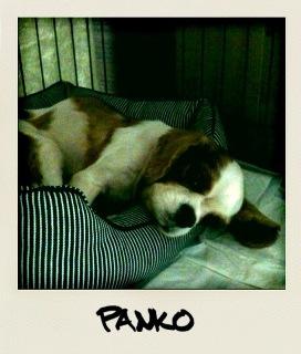 PANKO2.jpg