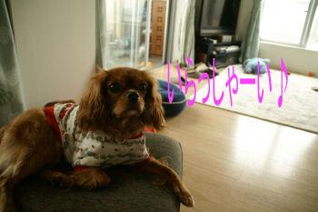 20091114 マロンちゃん