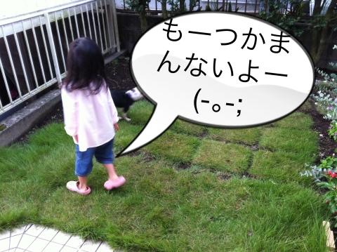 log176.jpg