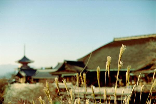 ススキの向こうに清水寺