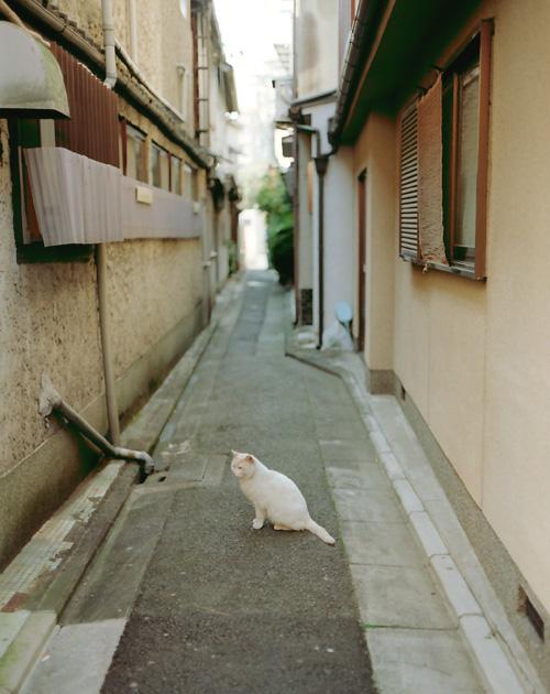 裏路地の白猫