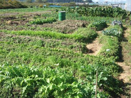 自然農法畑その1
