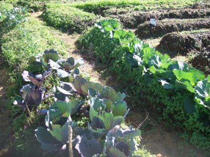 自然農法畑その2