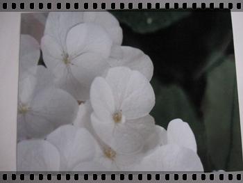 sa7_20110805134649.jpg