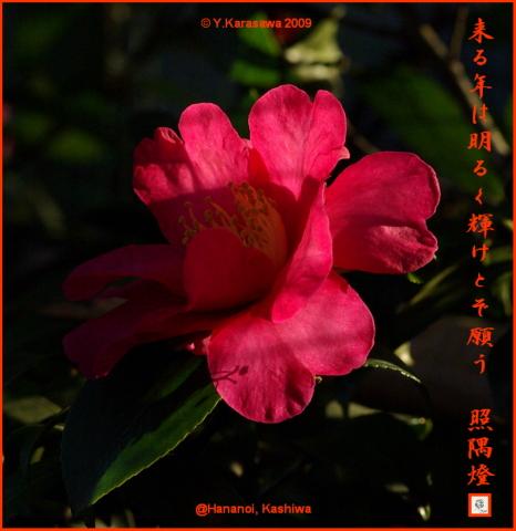 091231山茶花