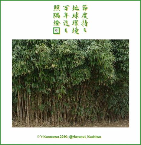 100102矢竹