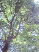 CA3C1008.jpg