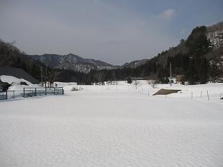 20110402生杉 001
