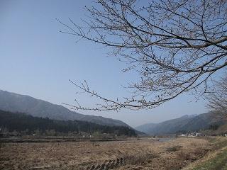 20110410生杉 002
