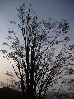 20110429-30生杉 047