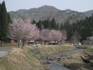 20110504生杉 004