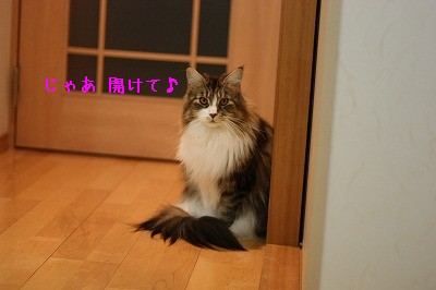 IMG_8604-1.jpg