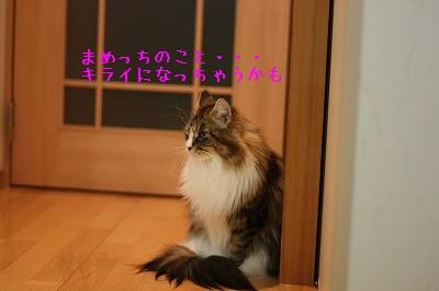 IMG_8605-1.jpg
