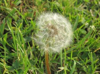 IMG_0020-200911.jpg