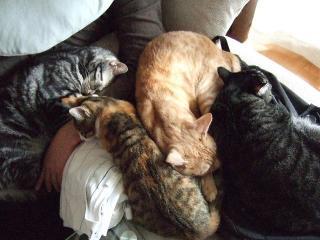 2009_1115cats0002.jpg