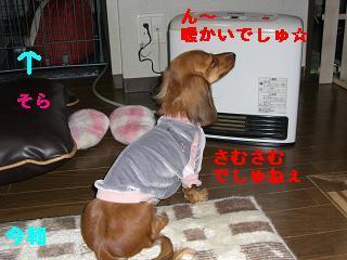 CIMG0599_20091218190034.jpg