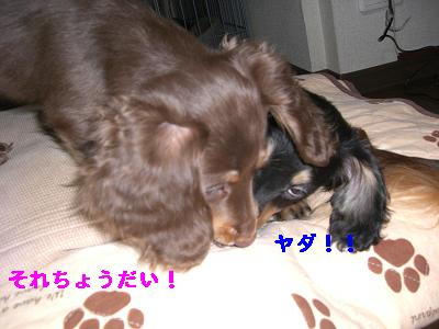 CIMG0643_20091221193025.jpg