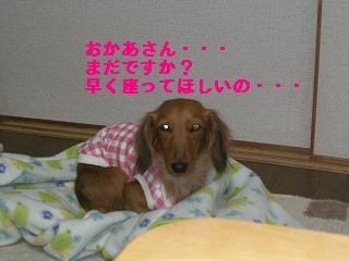 CIMG0683.jpg