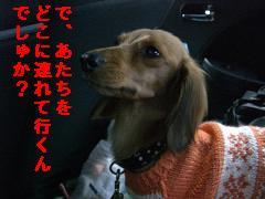 CIMG0693_20091228102818.jpg