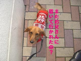 CIMG0732_20091229205435.jpg