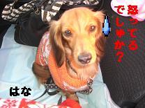 CIMG0736.jpg