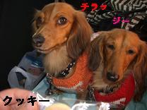 CIMG0739_20091229211443.jpg