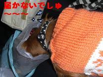 CIMG0744_20091229212246.jpg