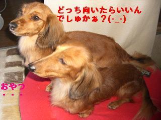 CIMG0772_20091230135638.jpg