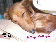 CIMG0787_20100101232943.jpg