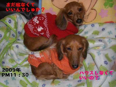 CIMG0788_20100101233252.jpg