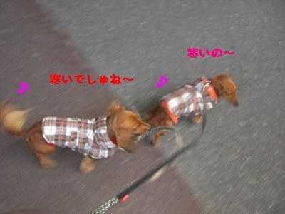 CIMG0801_20100101234605.jpg