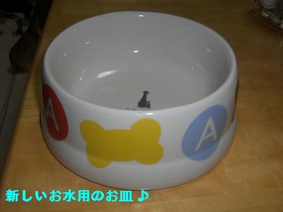 CIMG0819_20100104003712.jpg