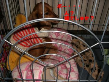 CIMG0822_20100104195809.jpg
