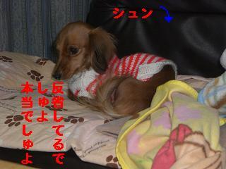 CIMG0824_20100104200516.jpg