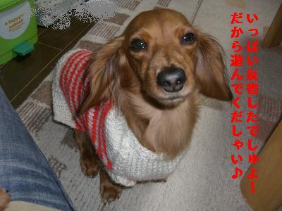 CIMG0829_20100104200700.jpg