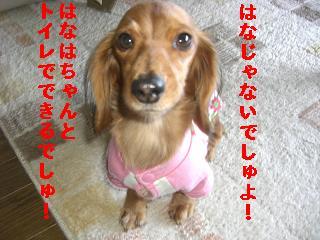 CIMG0835_20100106230855.jpg