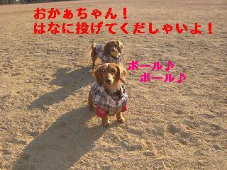 CIMG0847_20100107184205.jpg