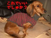 CIMG0852.jpg