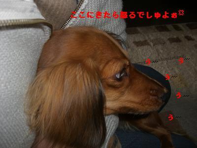 CIMG0895.jpg
