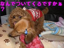 CIMG0902_20100112221651.jpg