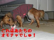 CIMG0914_20100112223227.jpg