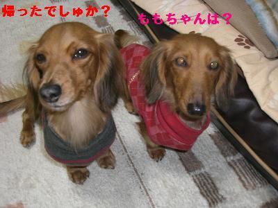 CIMG0942_20100113191859.jpg