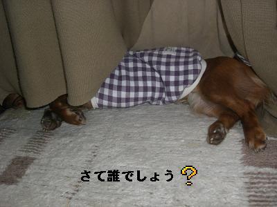 CIMG0960_20100115180127.jpg