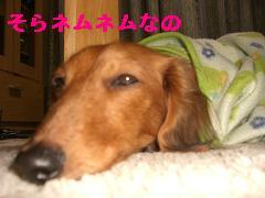CIMG0964.jpg