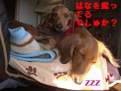 CIMG0992_20100117111857.jpg