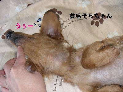 CIMG0995_20100120151816.jpg