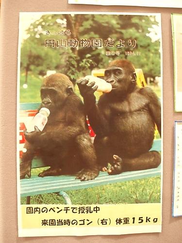 gonmaruyamazoo2009112201.jpg
