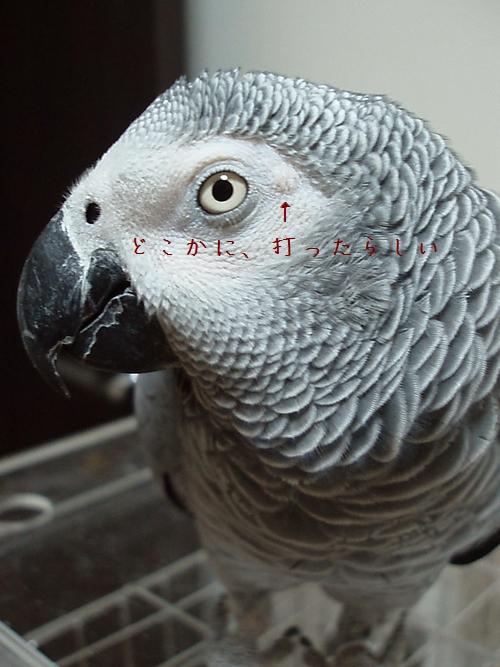 yomogi2009113000.jpg