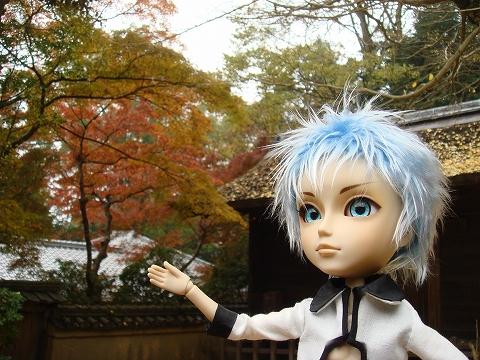 20091124-momiji-001.jpg