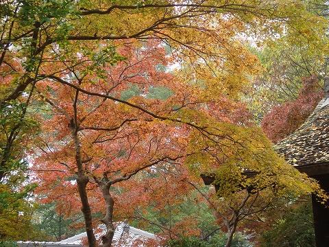 20091124-momijinomi-1.jpg